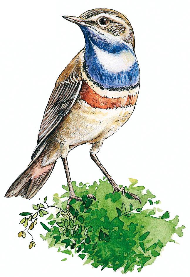 Conception graphique illustration couleur oiseau