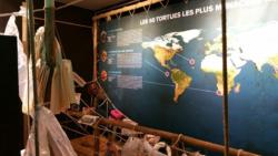Exposition tortues5