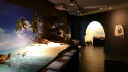 Exposition tortues2
