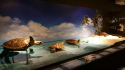 Exposition tortues3