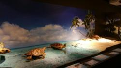 Exposition tortues7